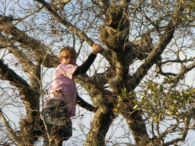 Tree_climbing_mar2008_004