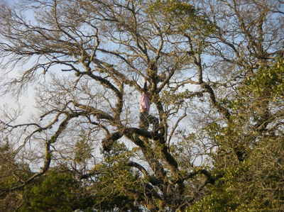 Tree_climbing_mar2008_006_2