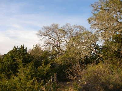 Tree_climbing_mar2008_007